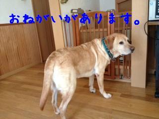 2_20121205140430.jpg