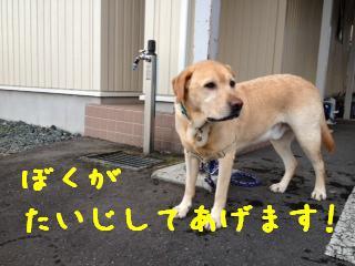 ___20121011145145.jpg