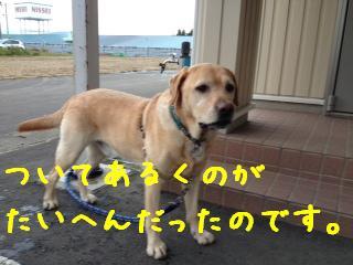 ___20121018143843.jpg