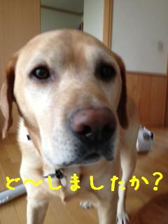 ___20121022145652.jpg