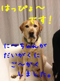 ___20121203140545.jpg