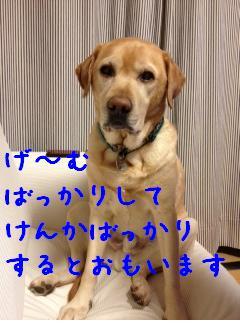 ___20121204145357.jpg