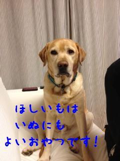 ___20121218142401.jpg