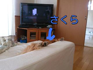 fc2blog_201208221323107d3.png