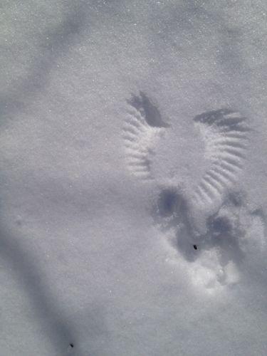 1雪上の天使