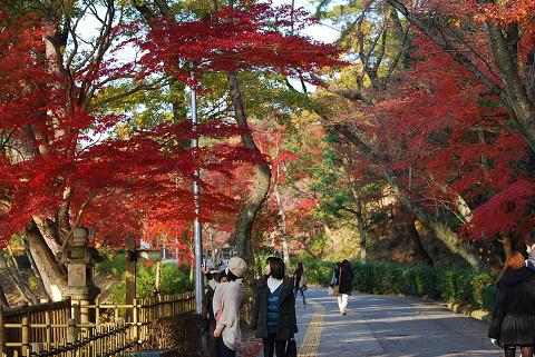 東公園の紅葉が
