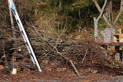 切り落とした枝の山