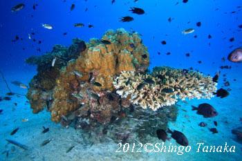 タオ島、ダイビング、根