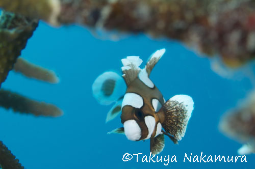 中村卓哉、水中写真、タオ島