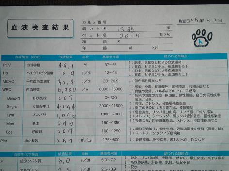 コロッケ血液検査1