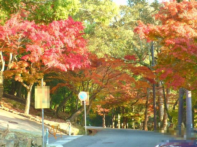 奈良公園の紅葉1