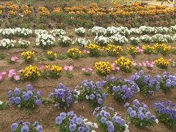ライフパークの花壇