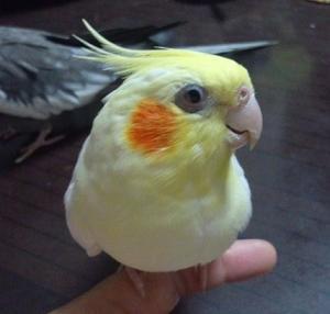 20121002桜2