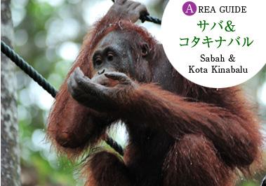 orangutan_top.jpg