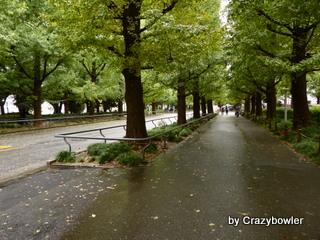 慶応大学日吉キャンパス 眺め