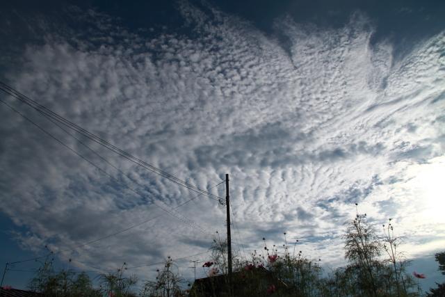 007秋の雲とコスモス