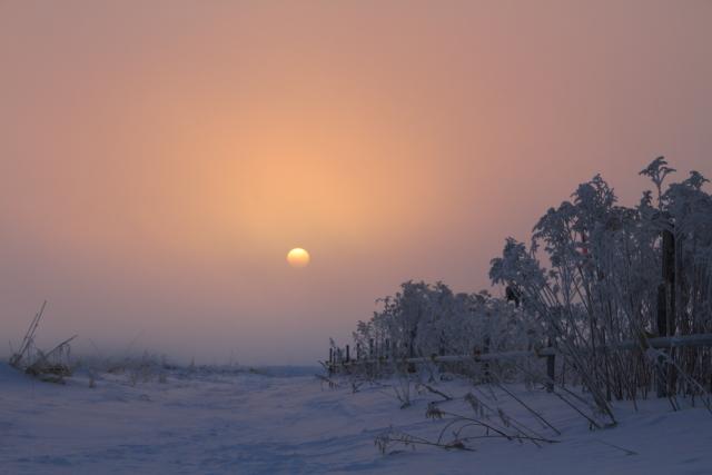 113ピンクの空と樹氷