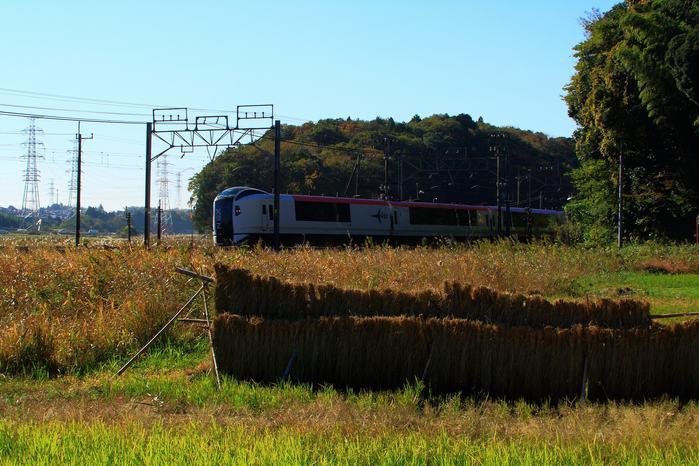 20121111sanpo06.jpg