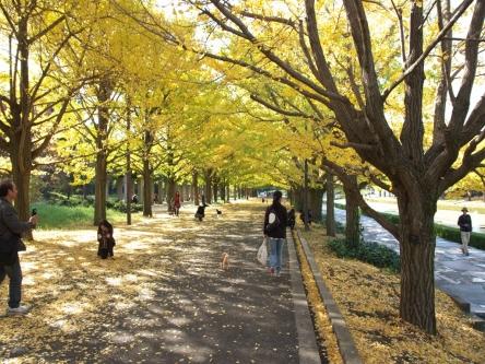 昭和記念公園002_R