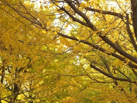 昭和記念公園003_R