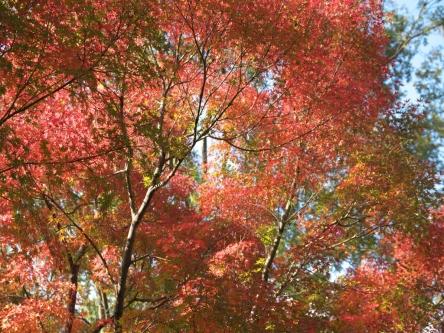 昭和記念公園006_R