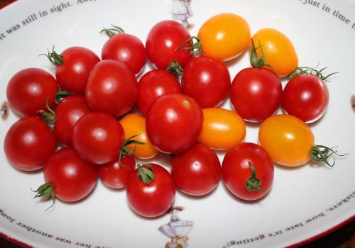 tomatosyuukaku.jpg