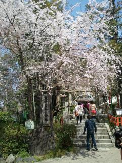 2013/3/30 熊野若王子神社