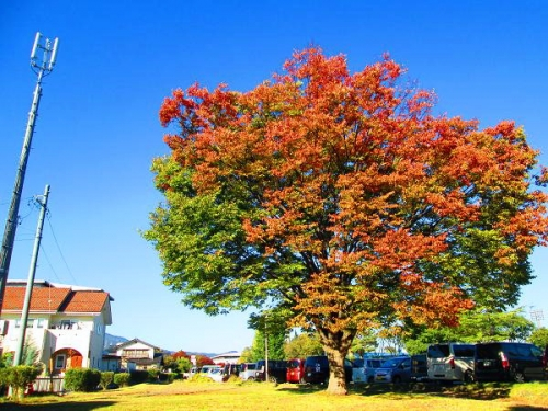癒しの秋2