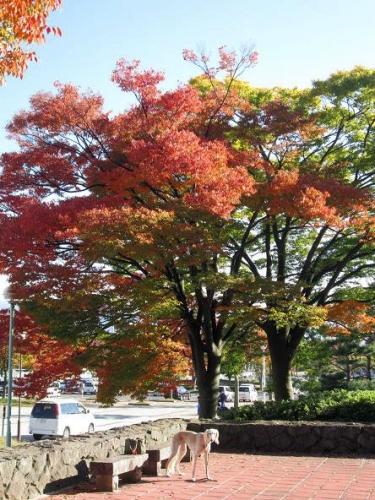 癒しの秋4