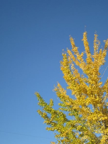 癒しの秋7