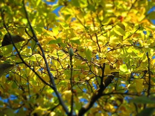 癒しの秋8
