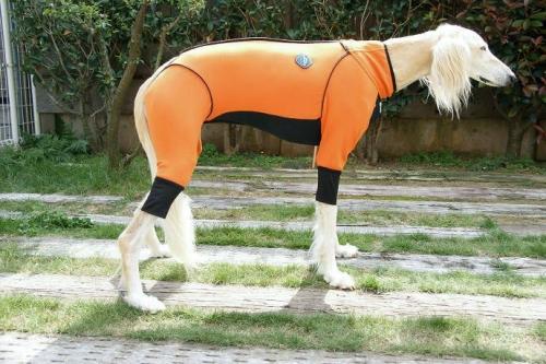サルーキの冬服1