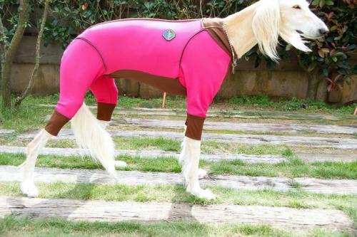 サルーキの冬服3
