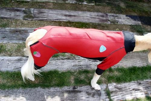 サルーキの冬服5