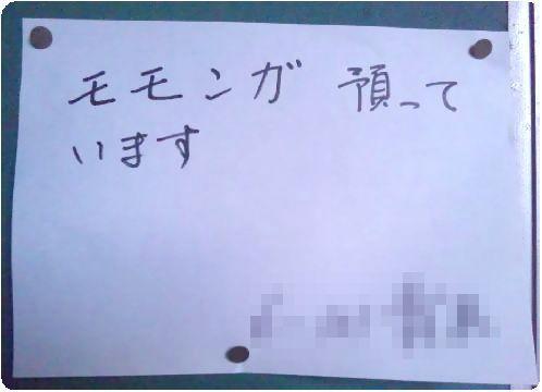 フクロモモンガ あゆみちゃん迷子事件