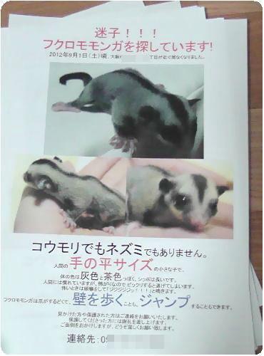 フクロモモンガ あゆみちゃん迷子の張り紙
