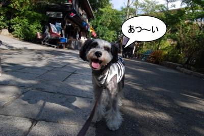 atu_20120915121812.jpg