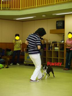 dancing powsey