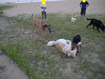 いつも散歩で会っていた犬たち。