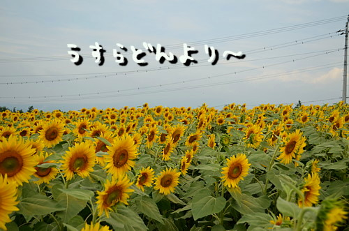 DSC_3275_20120816031954.jpg