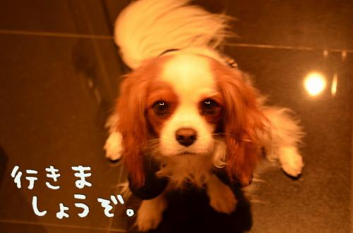 DSC_8878.jpg