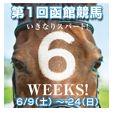 JRA函館競馬