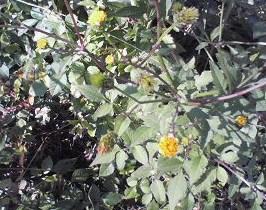 20121015野の花