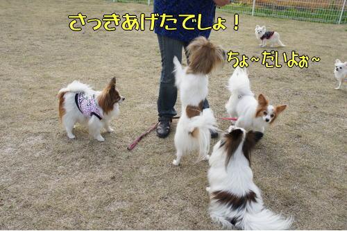 Field Wan4