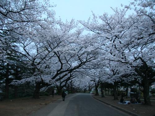 0327夜桜_09