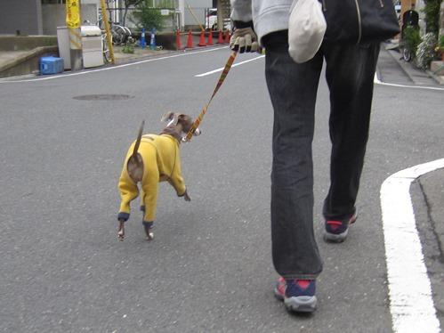0421お散歩_01