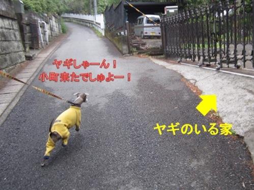 0421お散歩_07