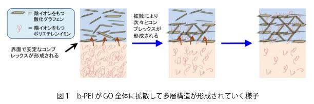 kyoto-u_b-PEI-GO_complex_image.jpg