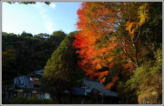 2014年11月15日御橋観音 (9)