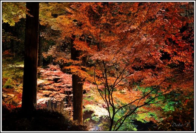 2014年11月23日大興善寺 (53)